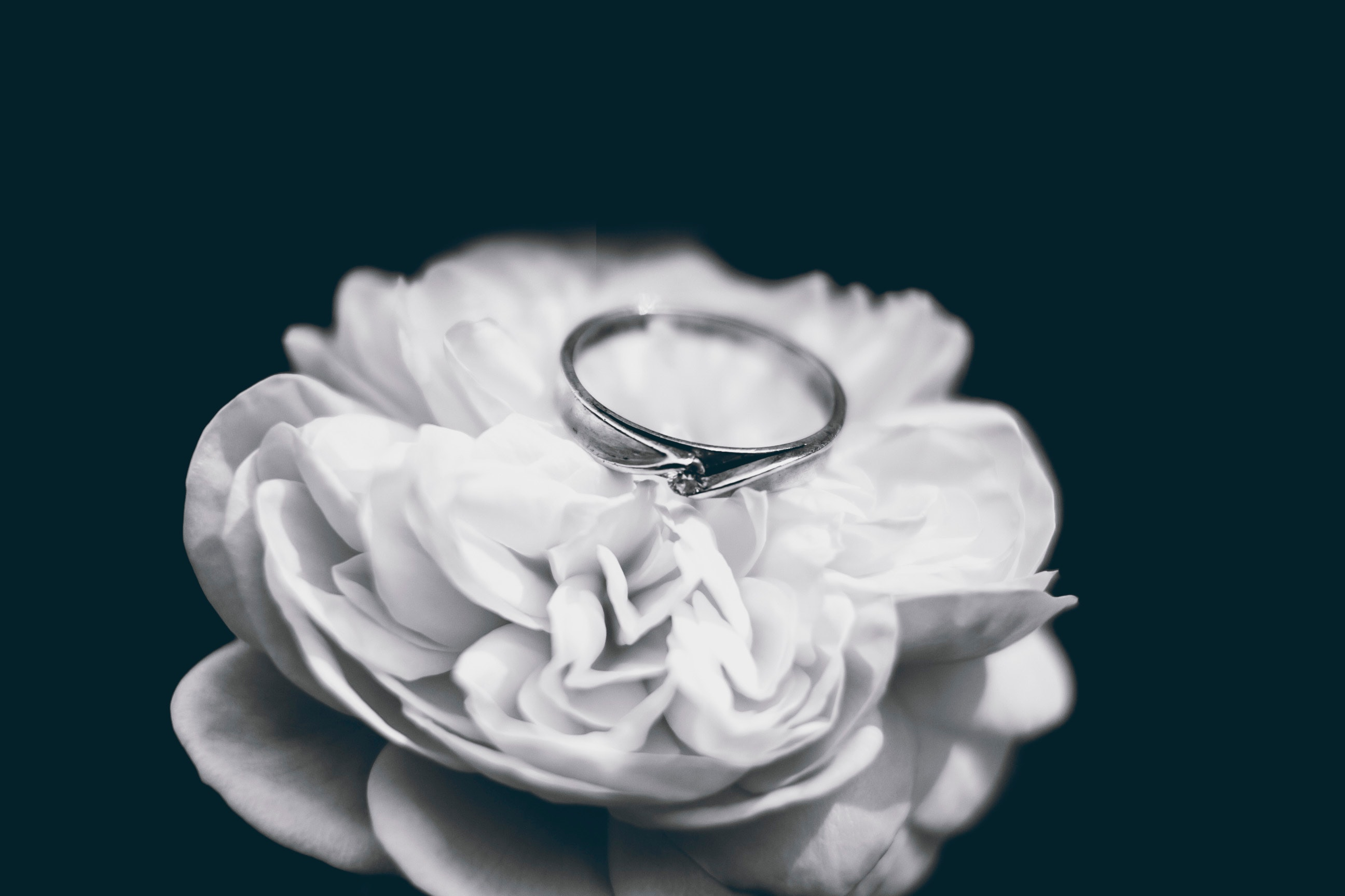 Stock black and white photo of a ring on top of a pale flower with many layers of petals, meant to euphemistically represent a butthole.