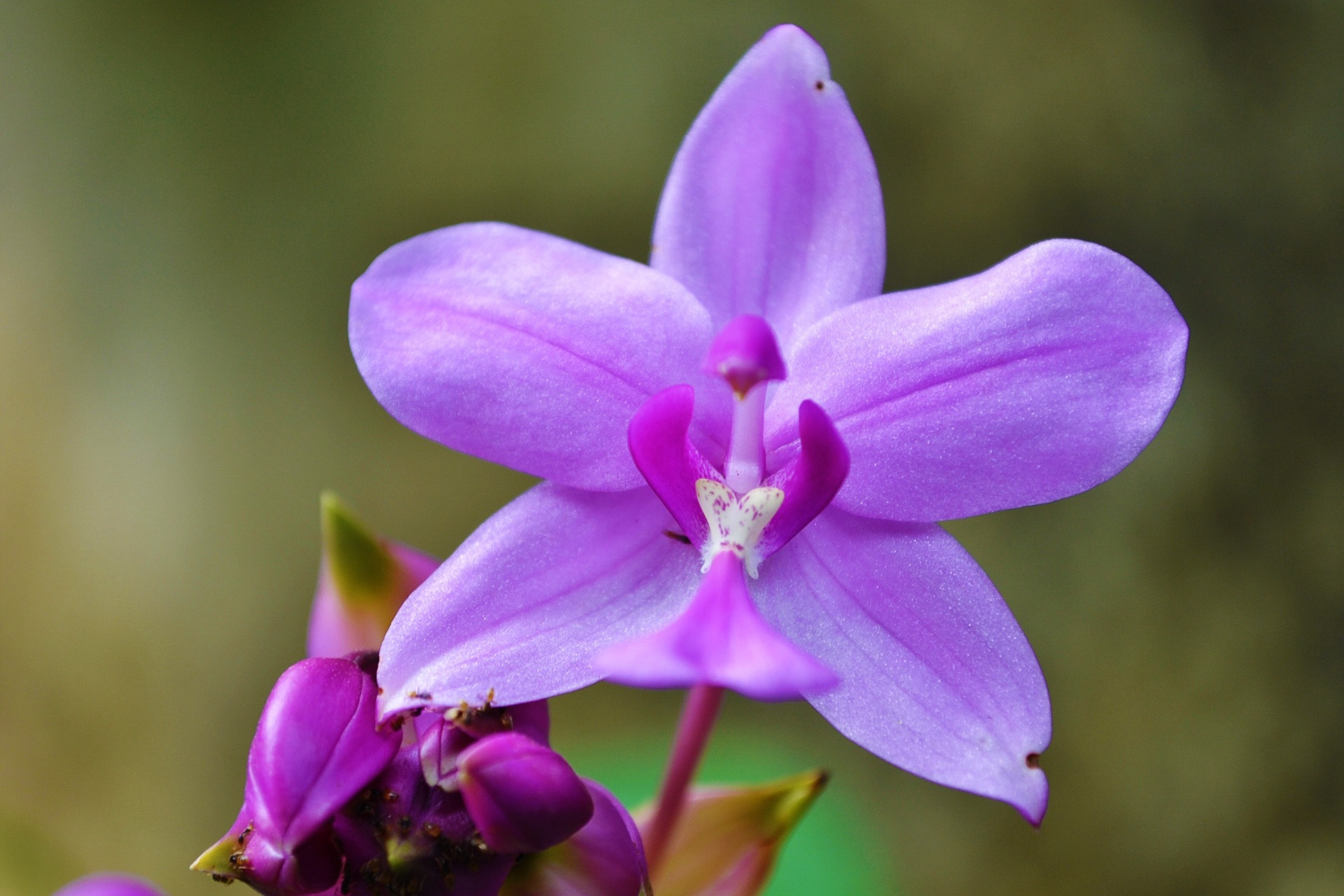 Stock image of a light purple orchid which looks vaguely similar to a vulva in sharp focus, with a blurry greenish background