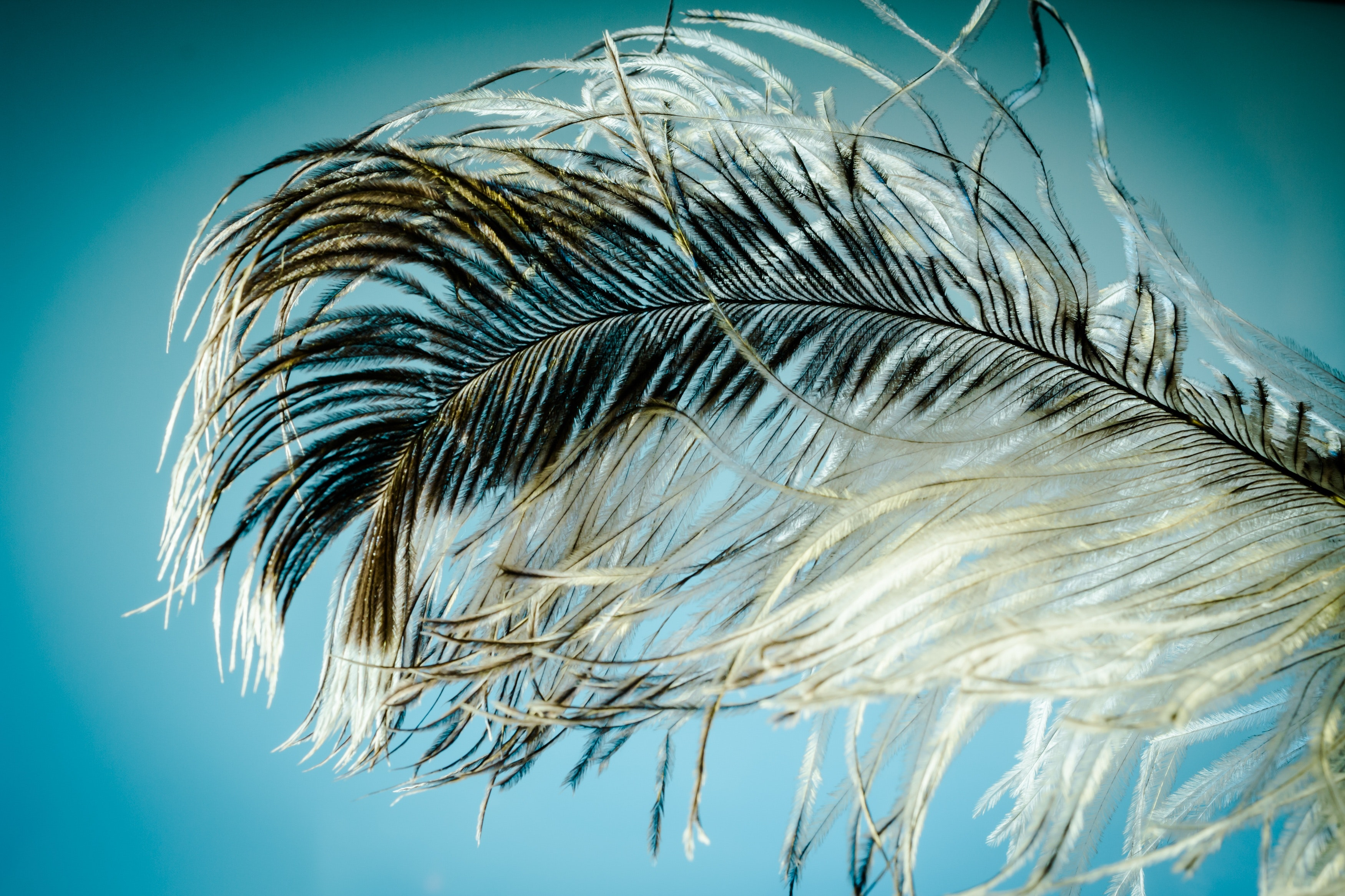 Stock photo of a fluffy black-and-white feather against a blue background, a reference to tickling, one of the kinks I don't have, and also a nice complement to my blue-and-purple blog colour scheme.